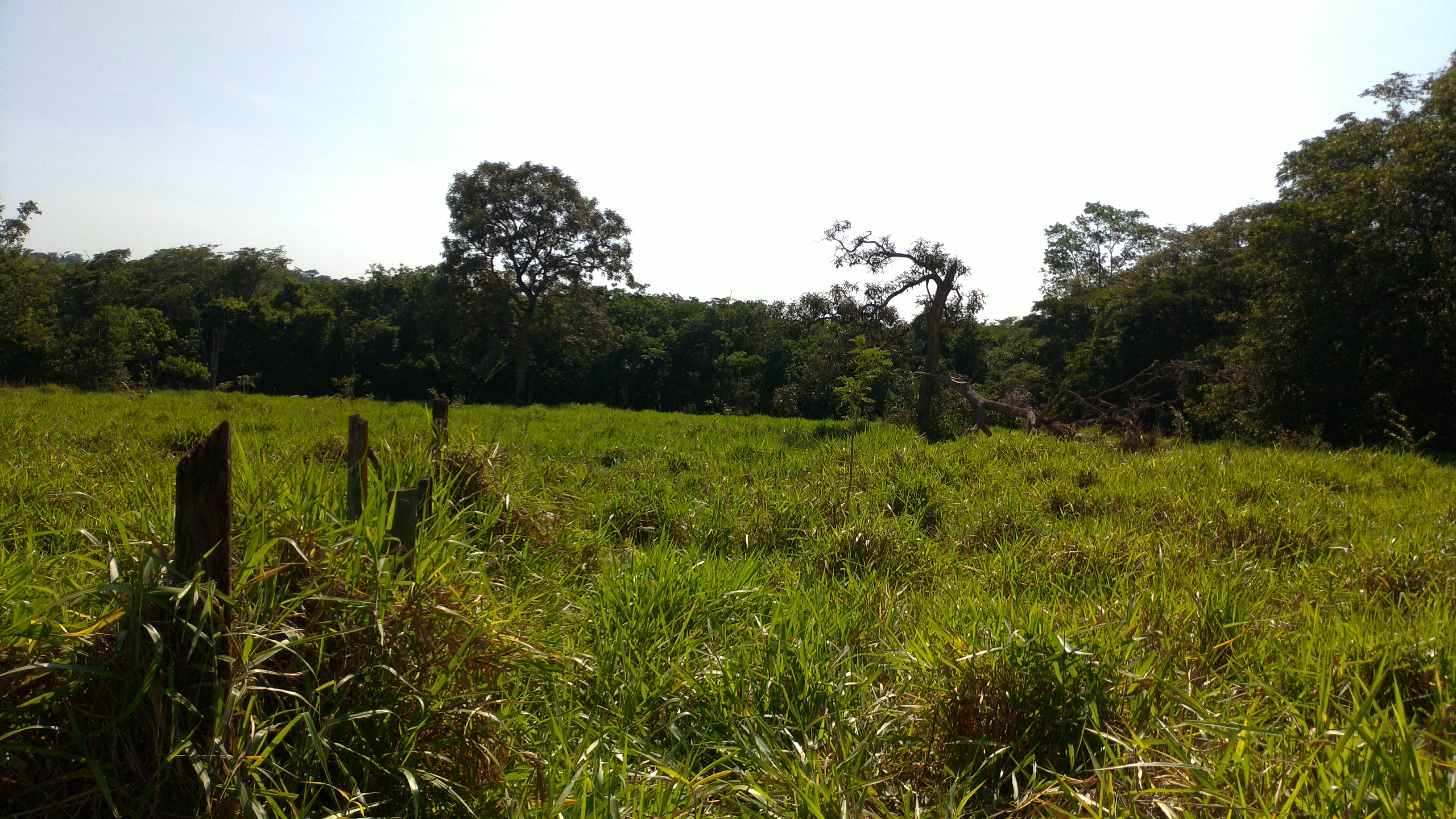 Rural à venda, PRÓXIMO DA APAE RURAL, Votuporanga